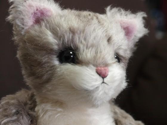 メイジ(猫) 顔2