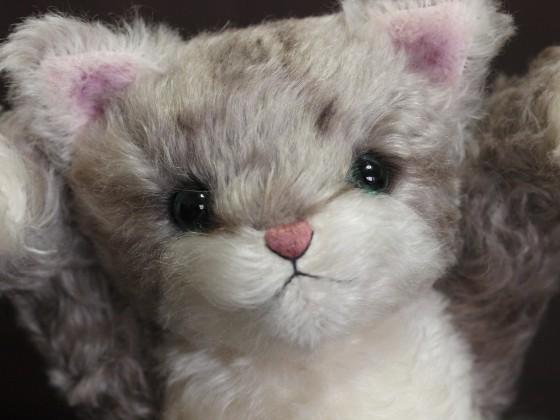 メイジ(猫) 顔3