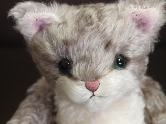 メイジ(猫) 顔